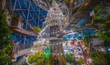 أكبر شجرة عيد ميلاد إستوائية مضاءة في دولة الإمارات